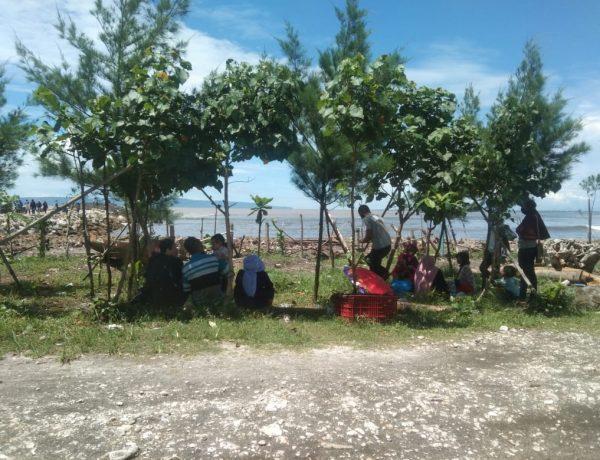 Bibit Pohon Cemara di Pantai Puger Hilang